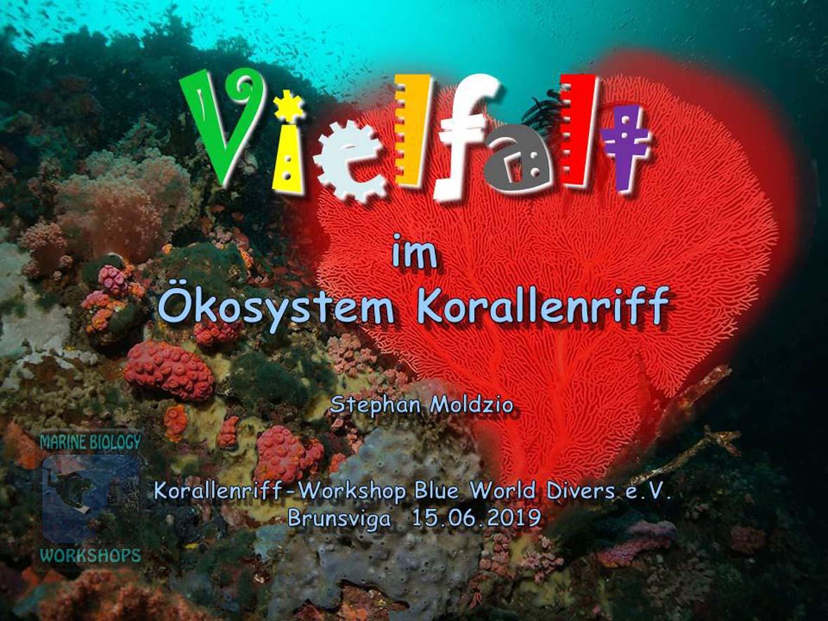 1906-Vielfalt-im-Ökosystem-Korallenriff