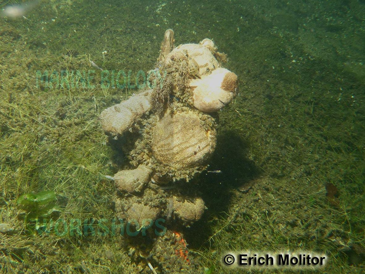 P1010029-Teddy,-versenkt