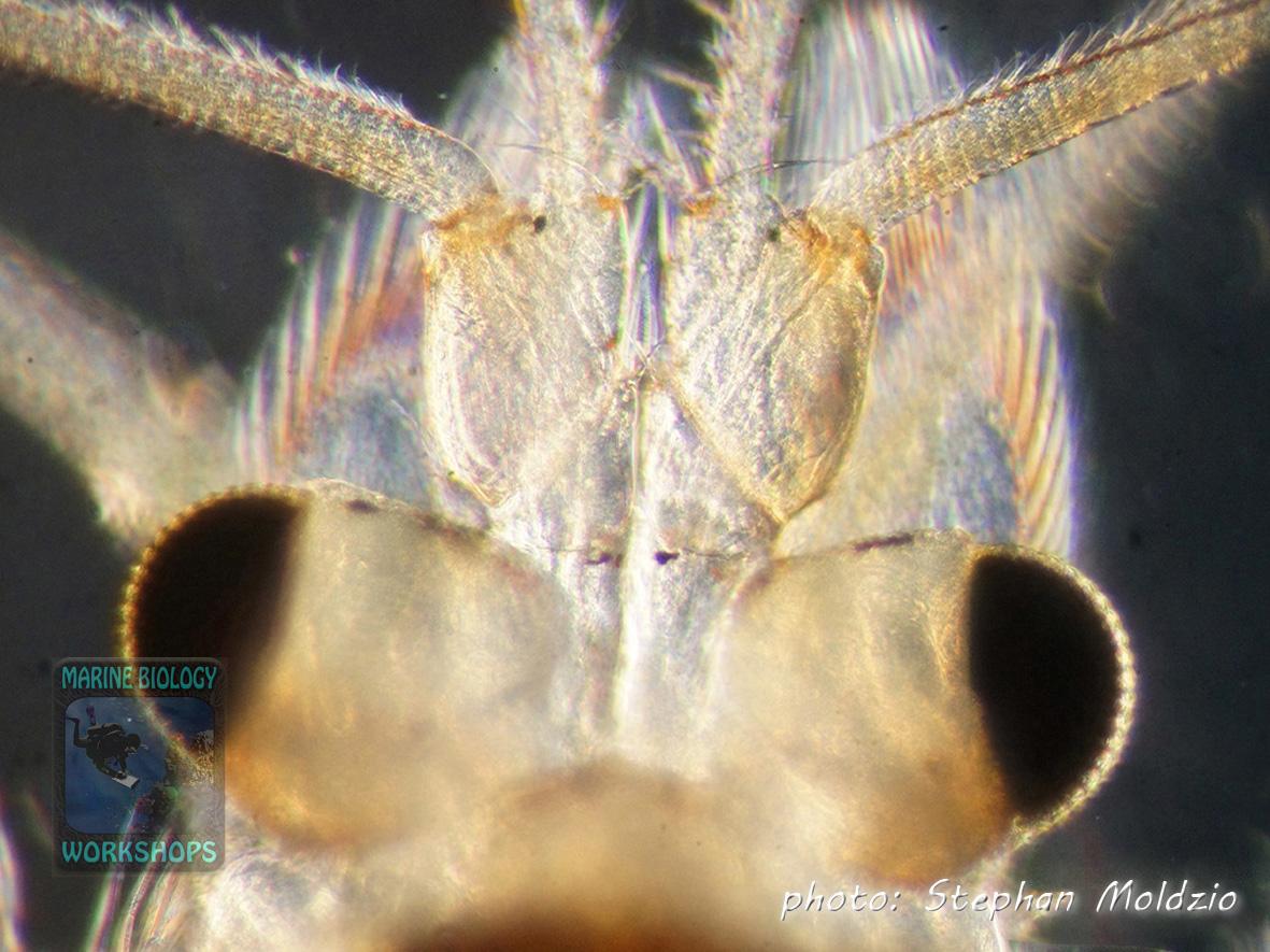 shrimp DSC03837