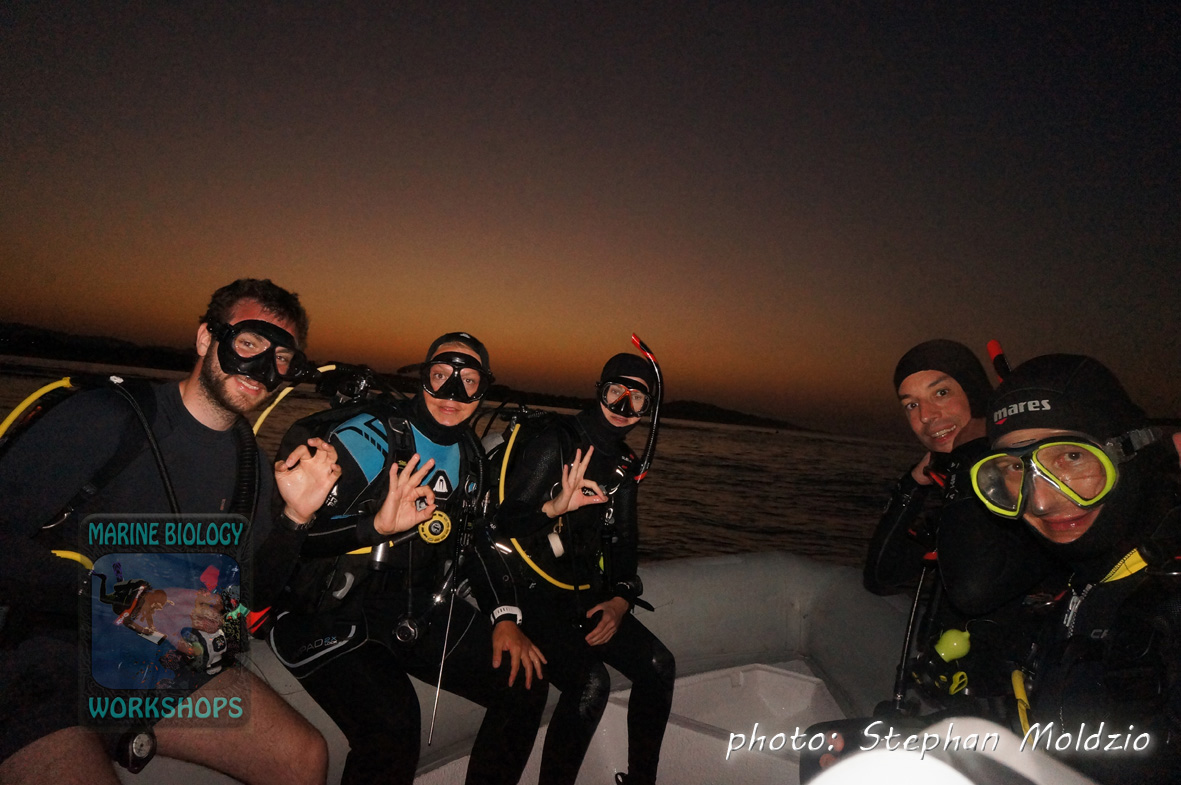 Night dive by Zodiac at Marsa Shagra north