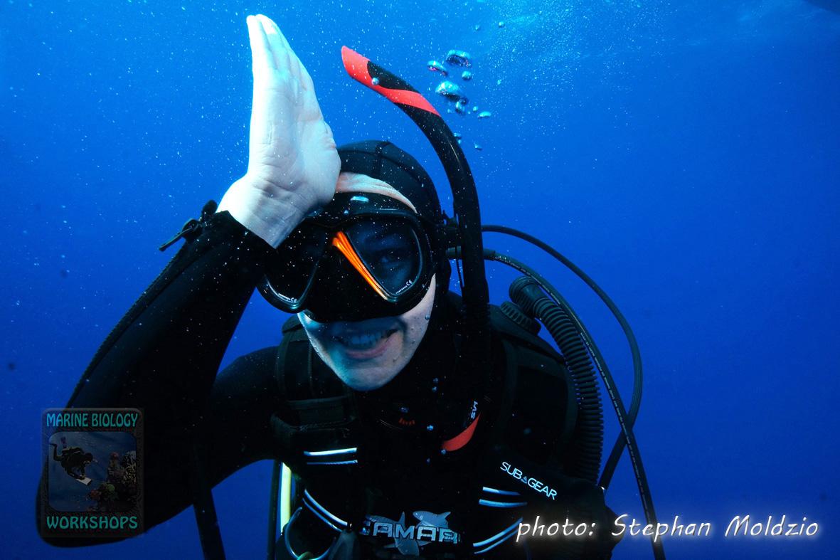 Elke shark