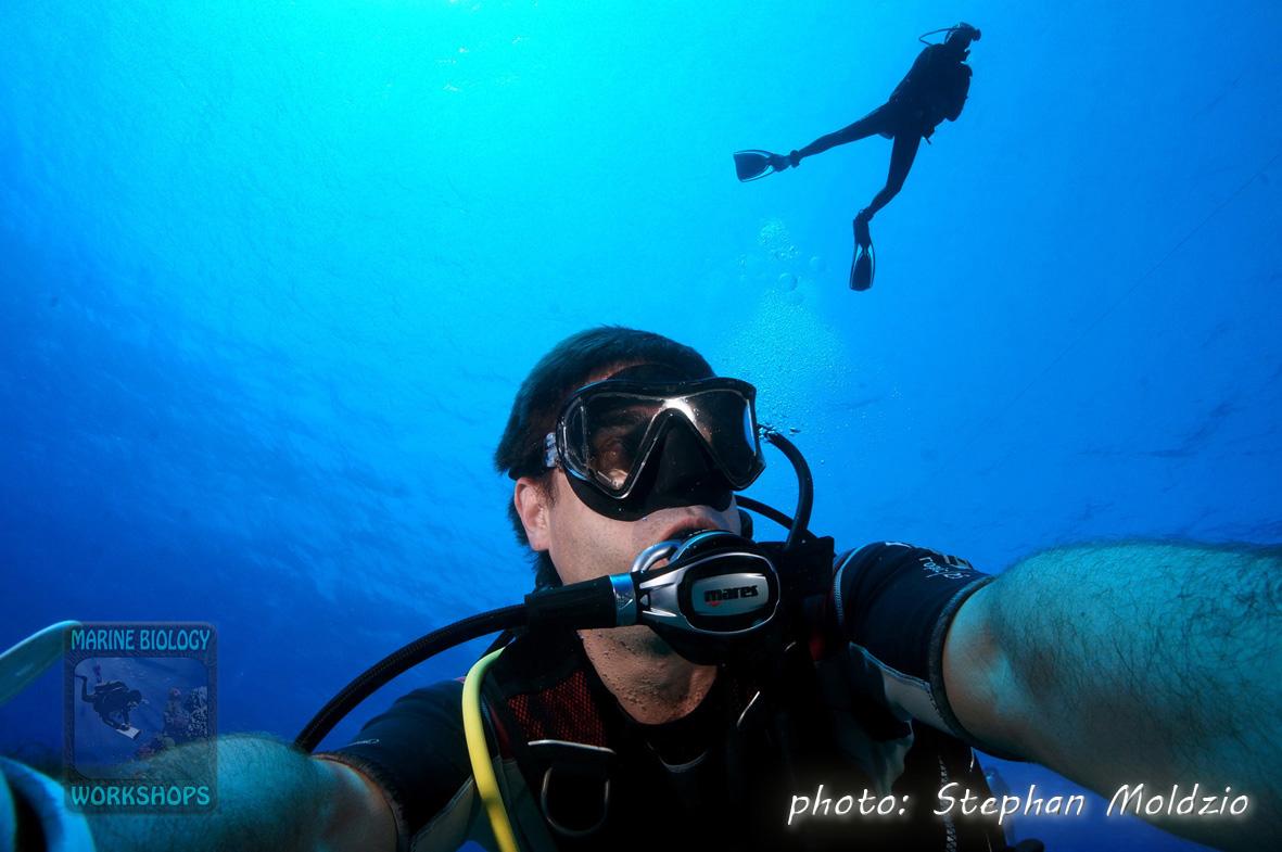 Stephan shark photographer