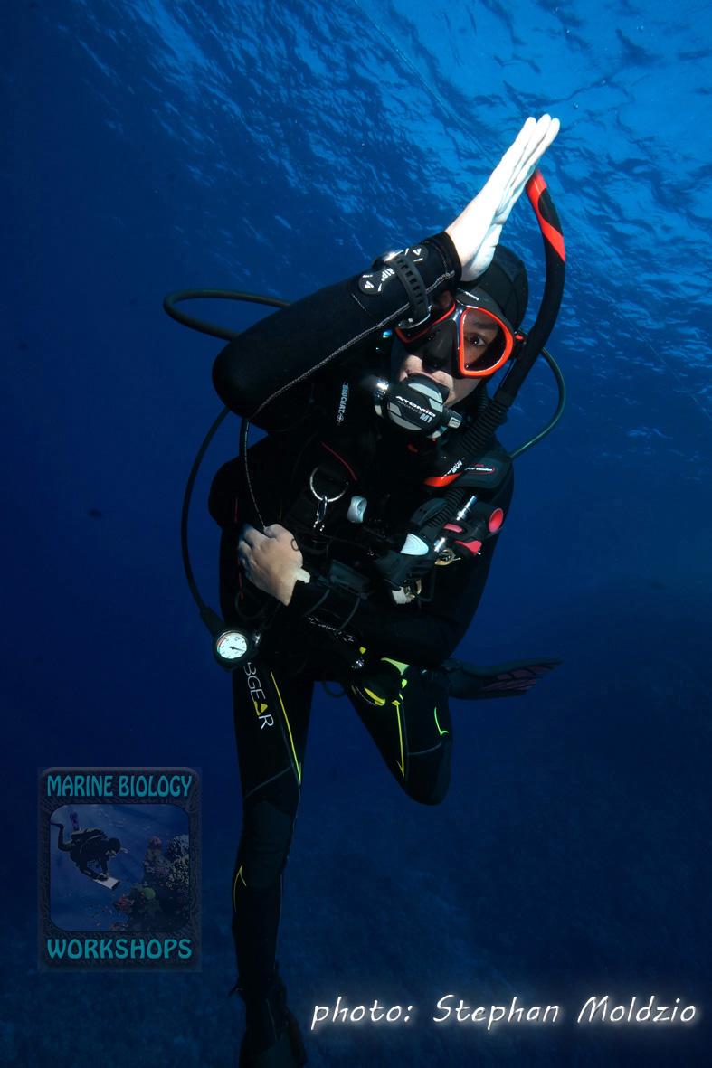 Gottfried shark