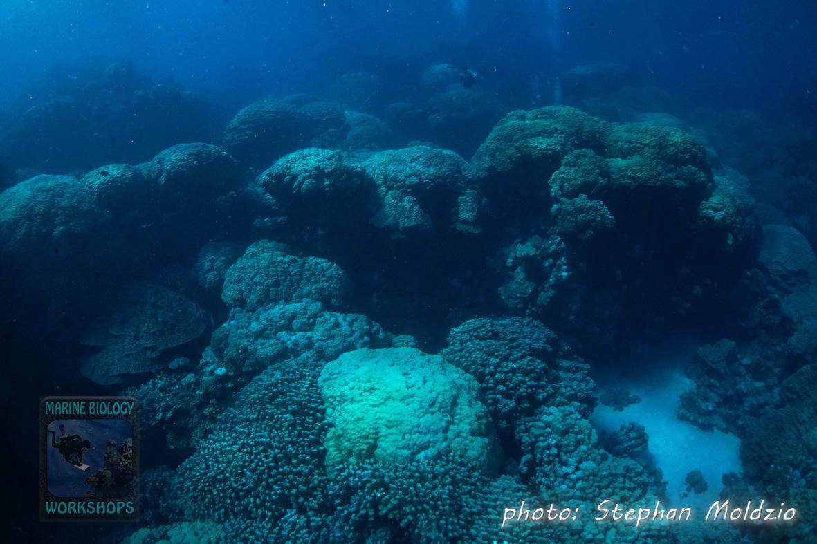 Huge Porites formations at Angel reef