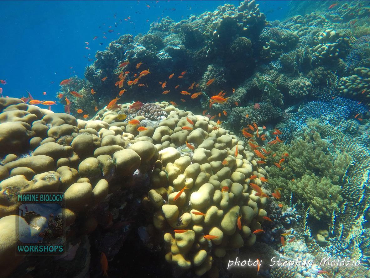 Coral garden at Daisy