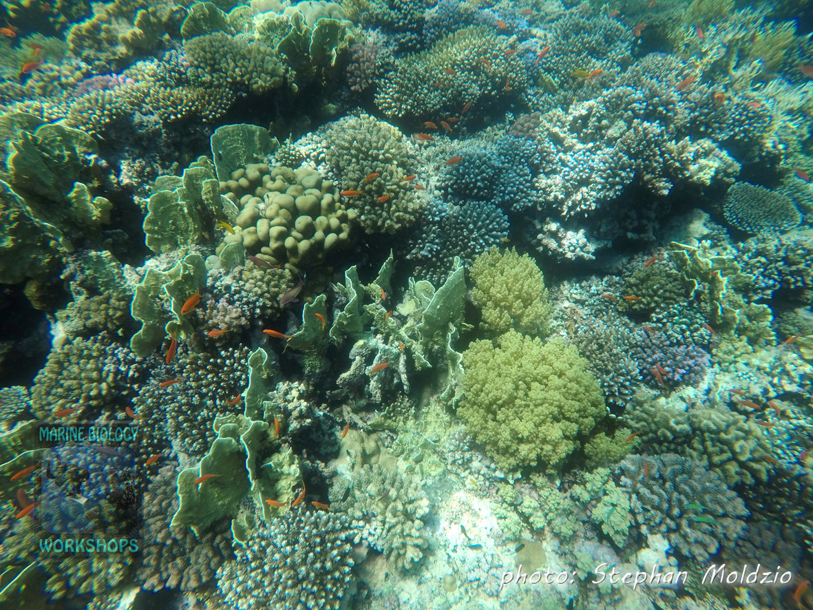 Coral garden at Daisy