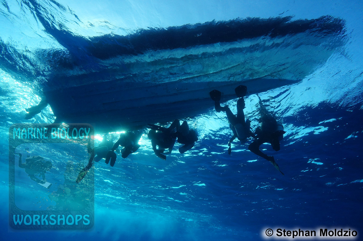 4DSC05197_divers_below_zodiac