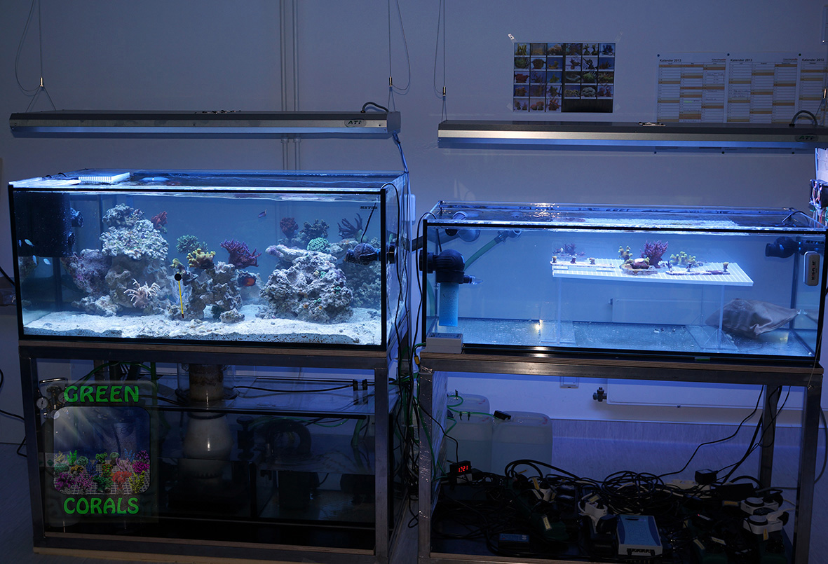 17 Aquarienanlage GEOMAR 31.7.13 DSC01527