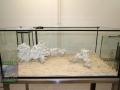 6 Einbringung Sand & Riffkeramik DSC08814