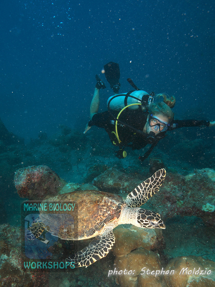 Lauren and the Hawksbill Turtle