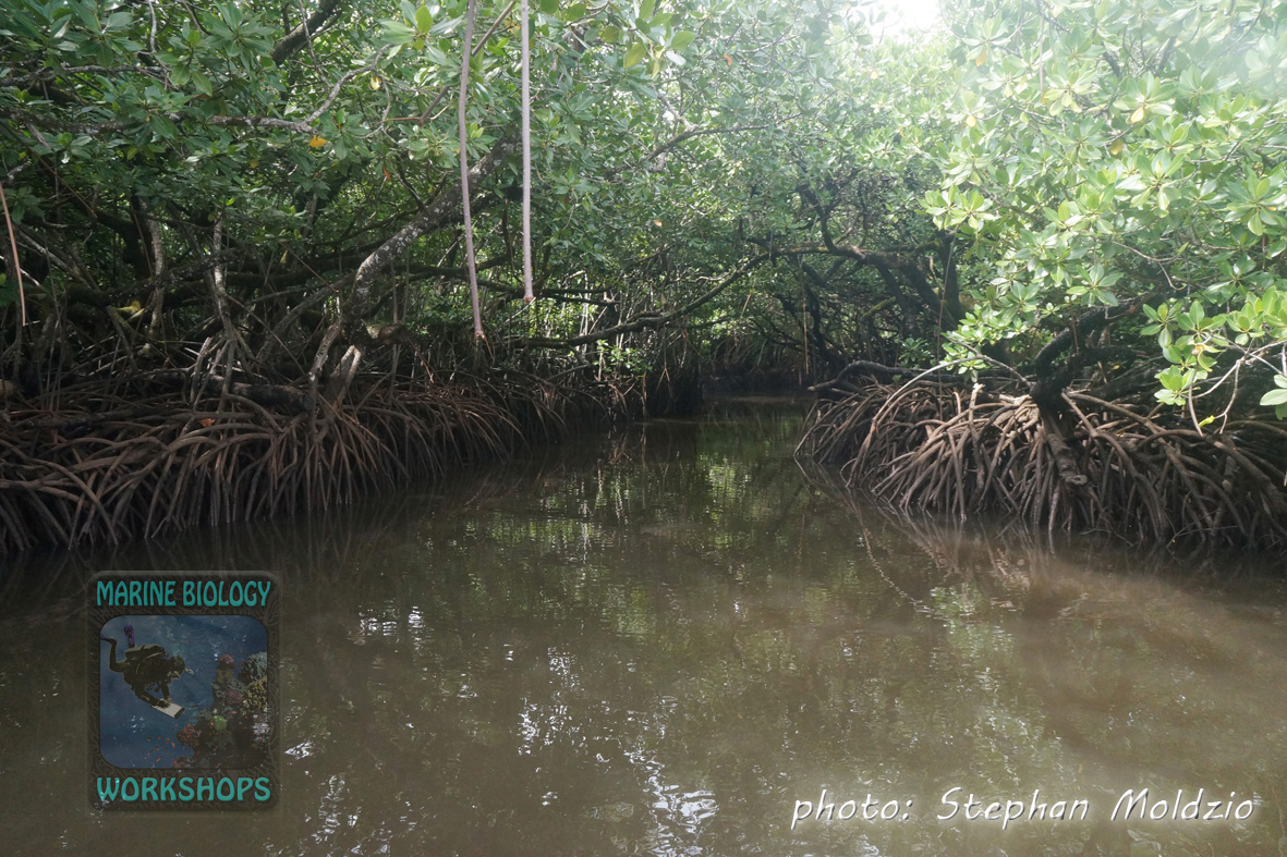 Mangroves at Maaq