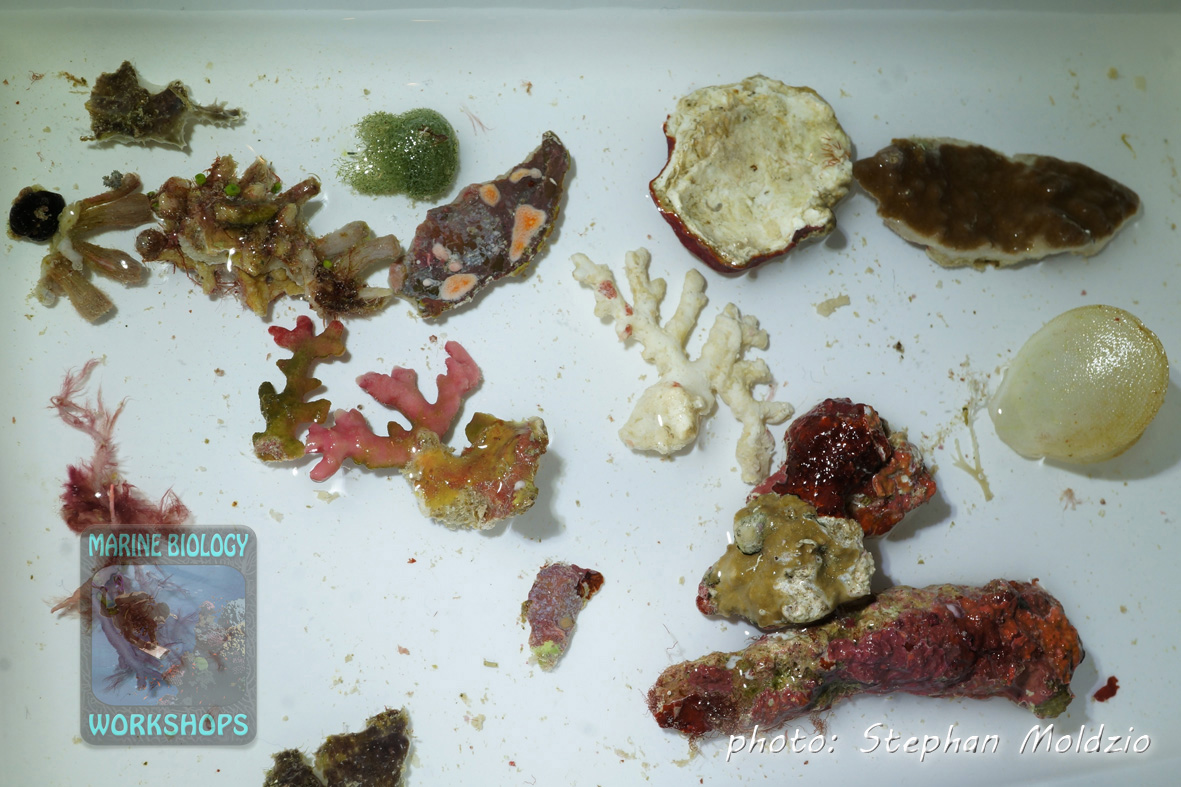 Sample of reef rock with sessile and mobile invertebrates