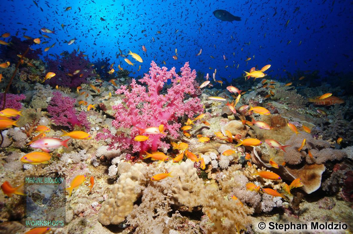 8 Marine life - Elphinstone