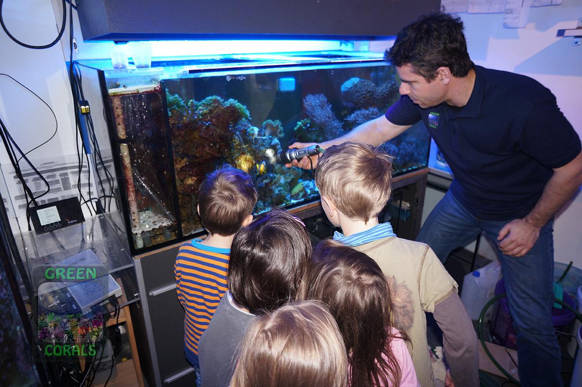 Anemonenfische beschützen ihr Gelege DSC09011