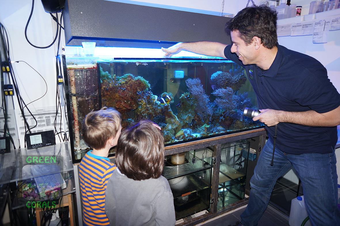 Anemonenfische beschützen ihr Gelege DSC09014