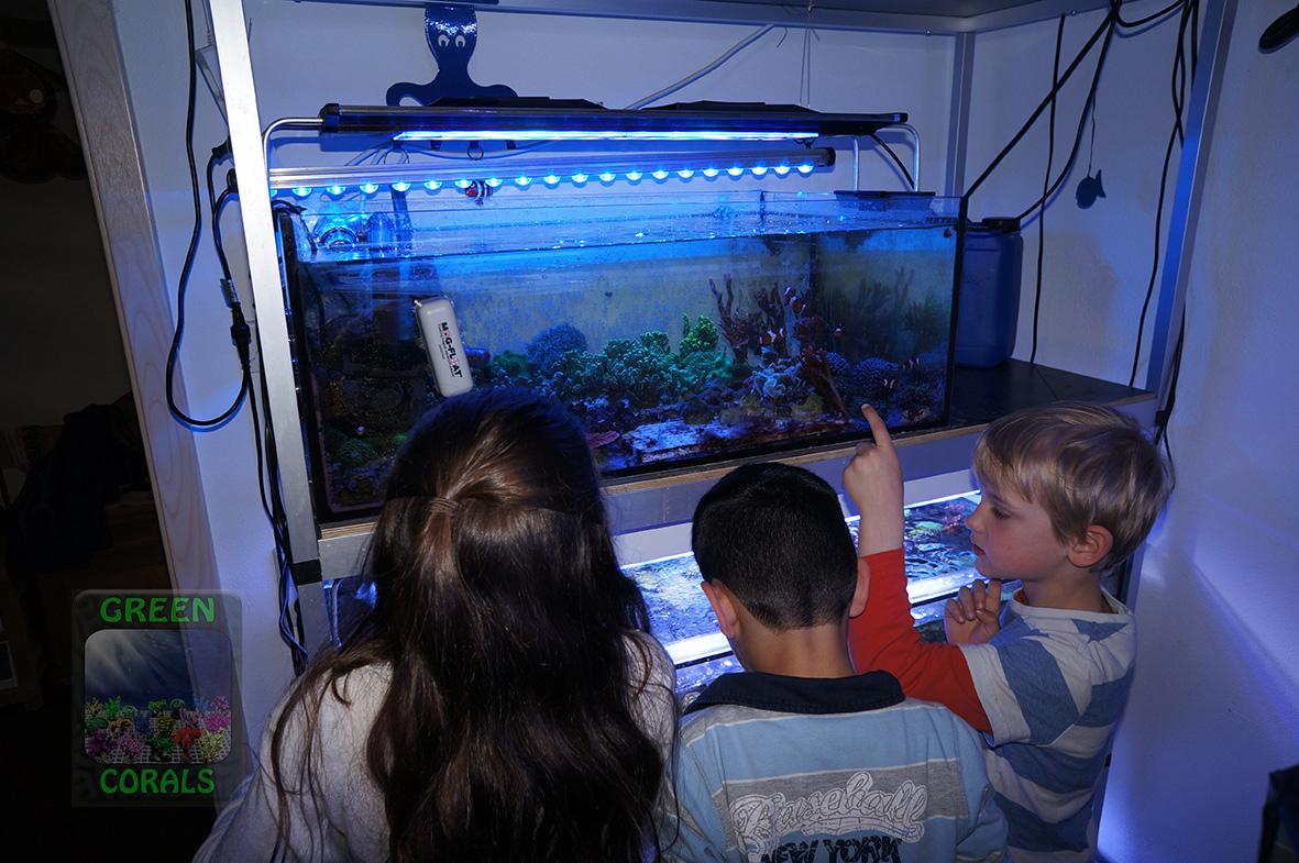 Fische füttern DSC08999