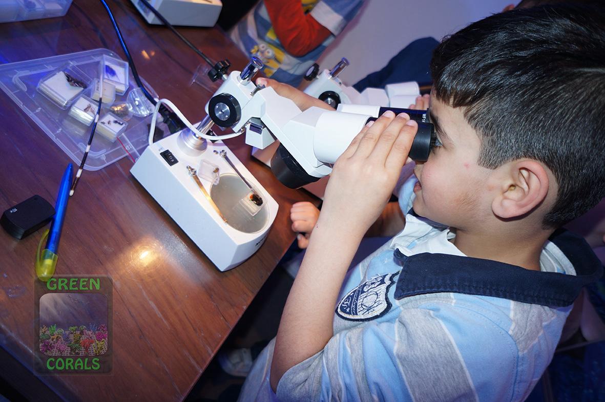 Mikroskopieren von Kleinlebewesen DSC08977