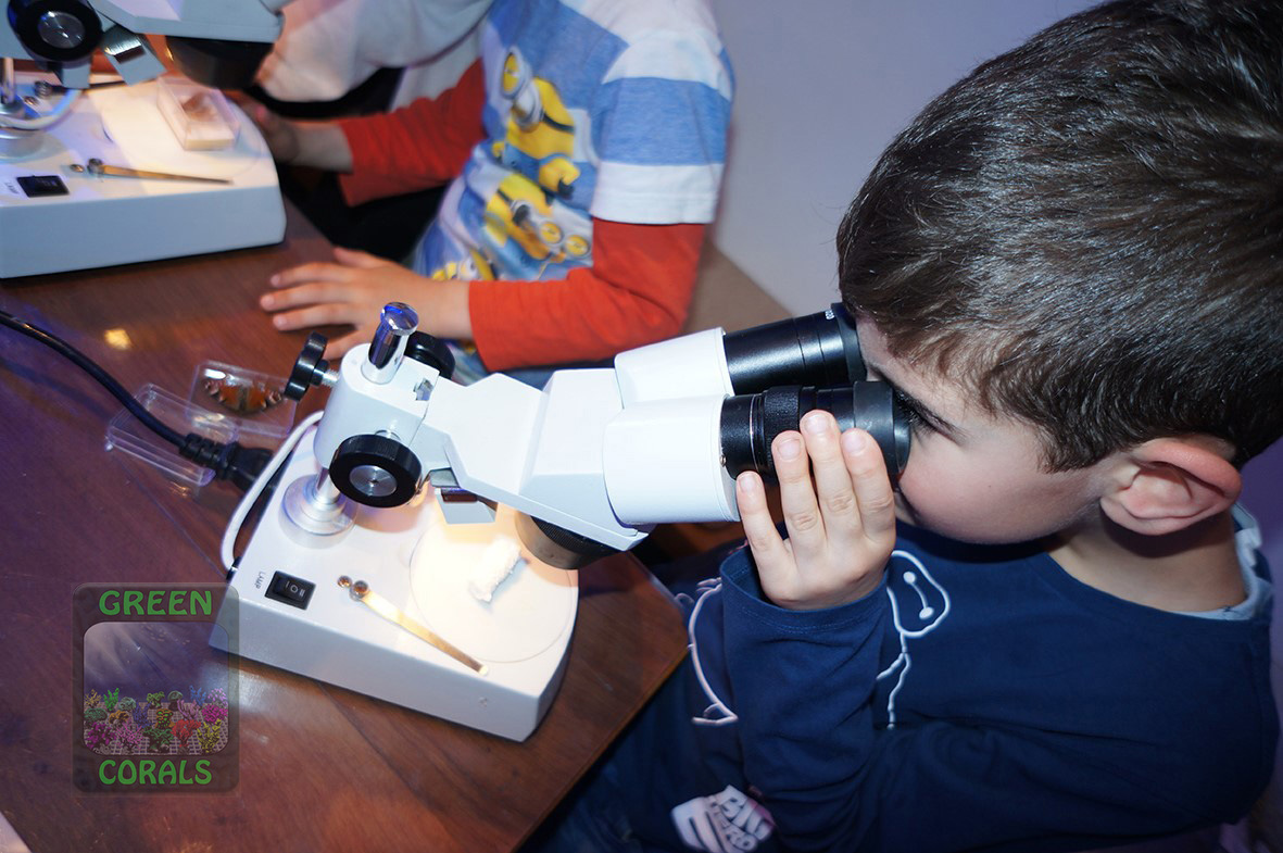 Mikroskopieren von Kleinlebewesen DSC08978