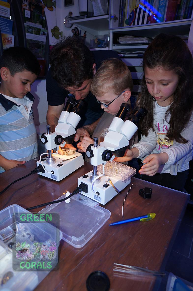 Mikroskopieren von Kleinlebewesen DSC08994