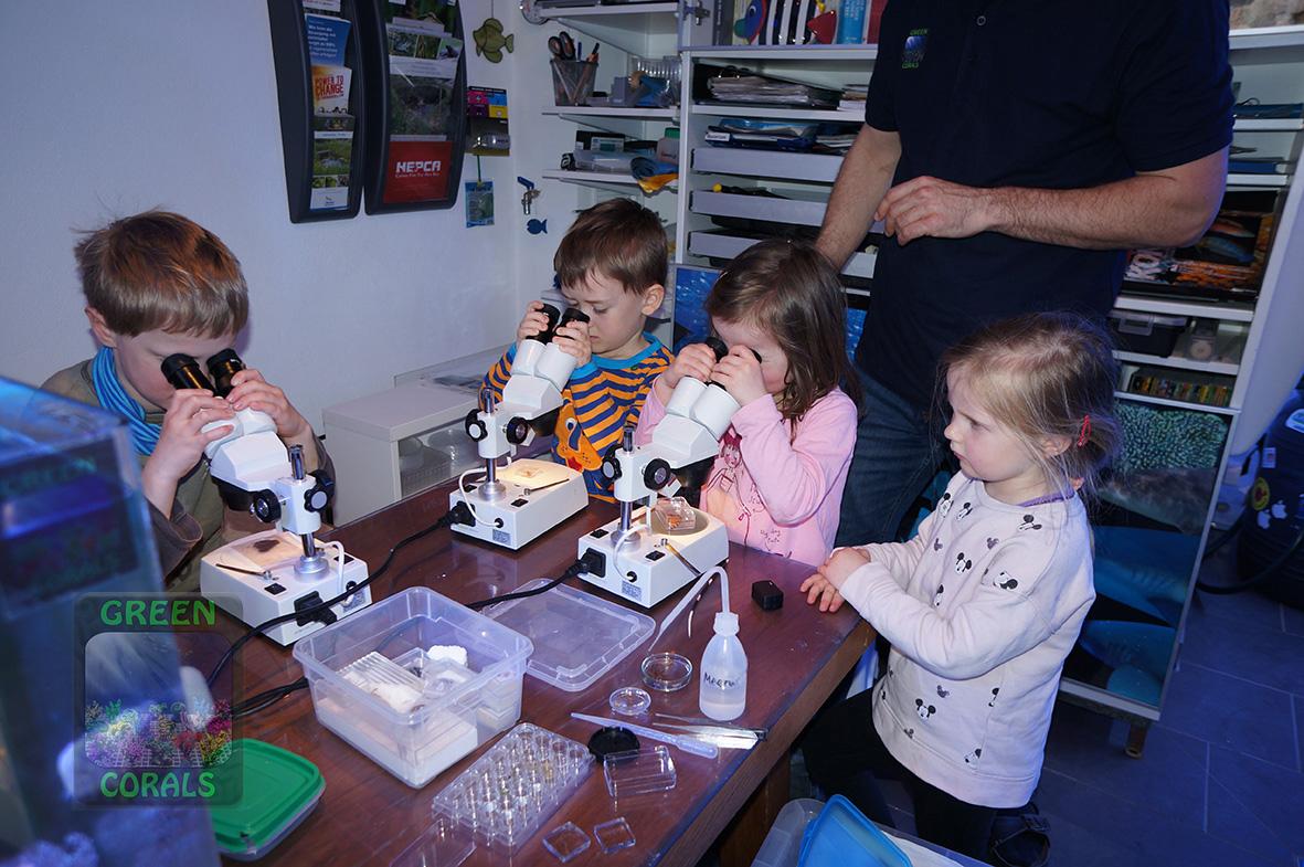 Mikroskopieren von Kleinlebewesen DSC09034