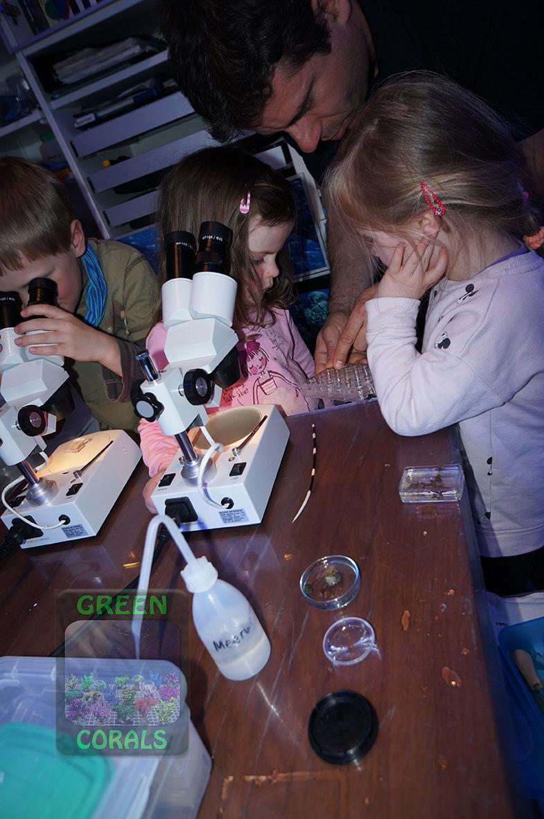 Mikroskopieren von Kleinlebewesen DSC09046