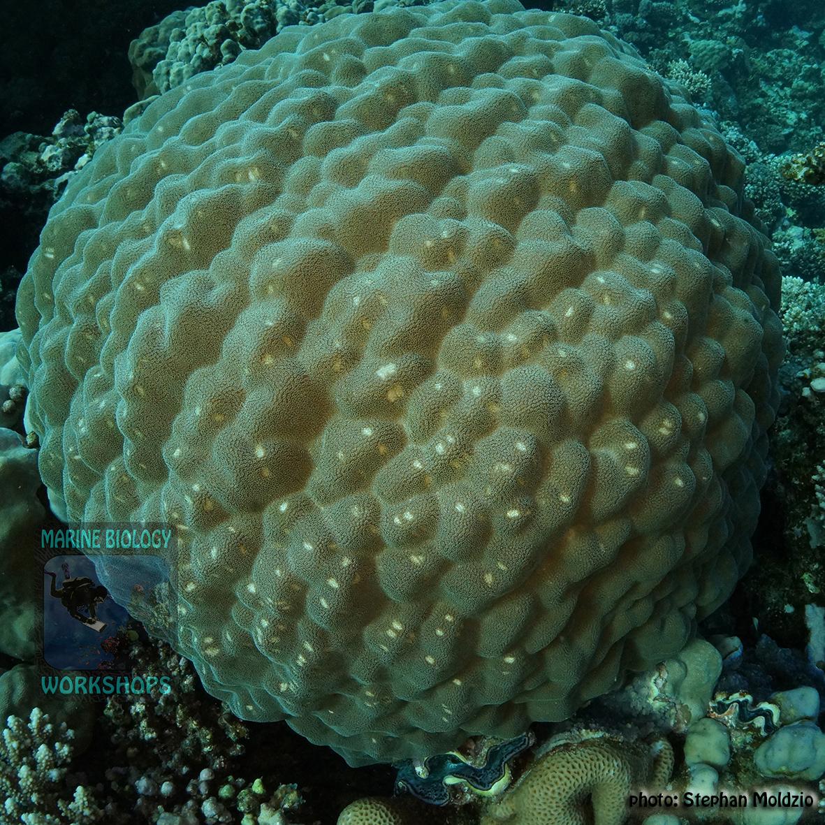 11 Invertebrate survey - parrotfish feeding scars DSC01011