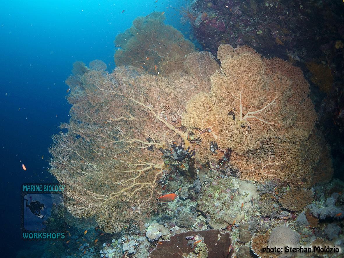 13 Substrate Survey - Annella mollis DSC01436