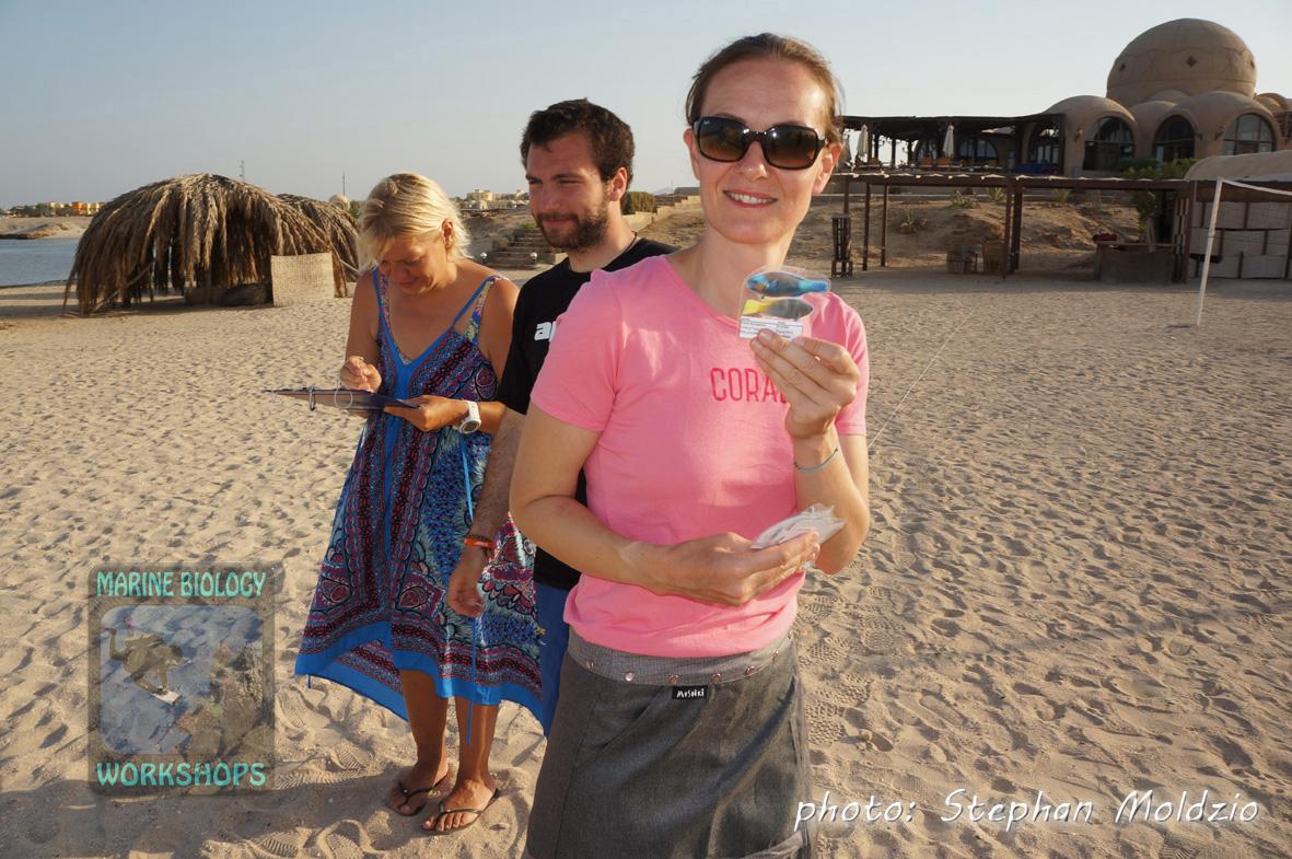 Reef Check EcoDiver course - Beach Exercise