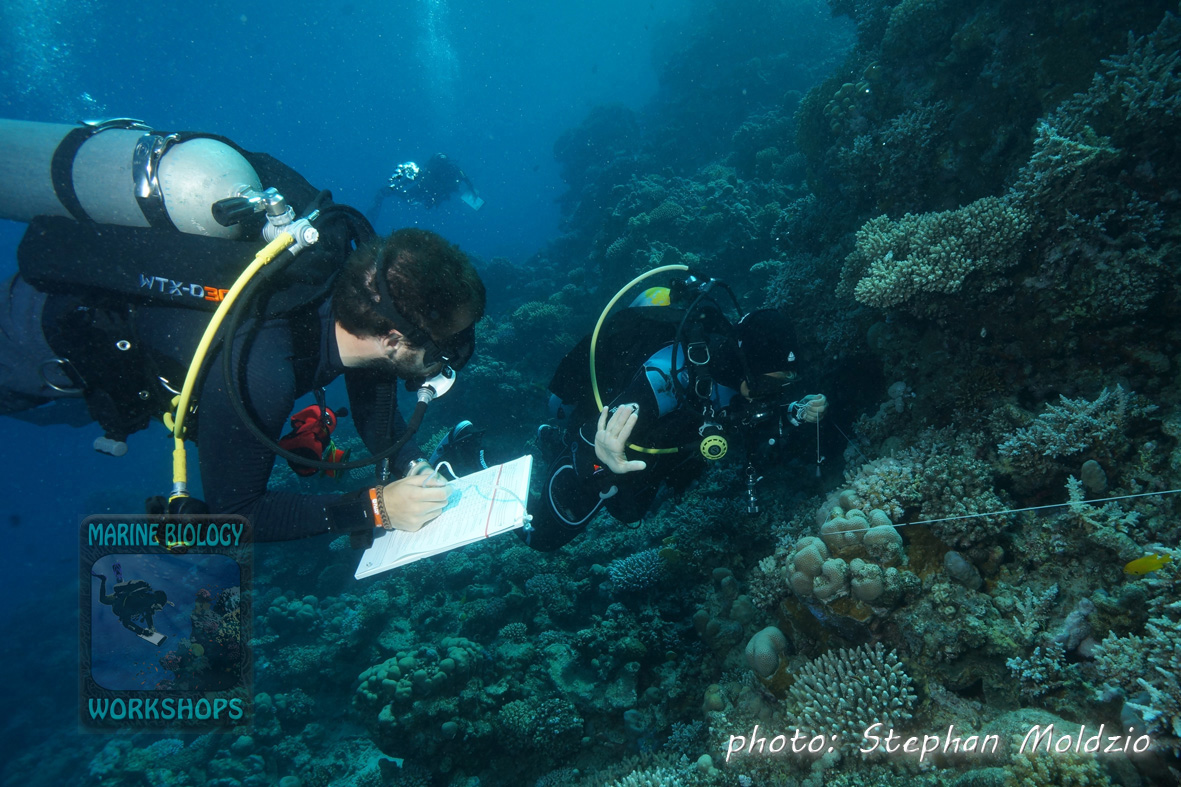 Substrate team at work at Marsa Egla