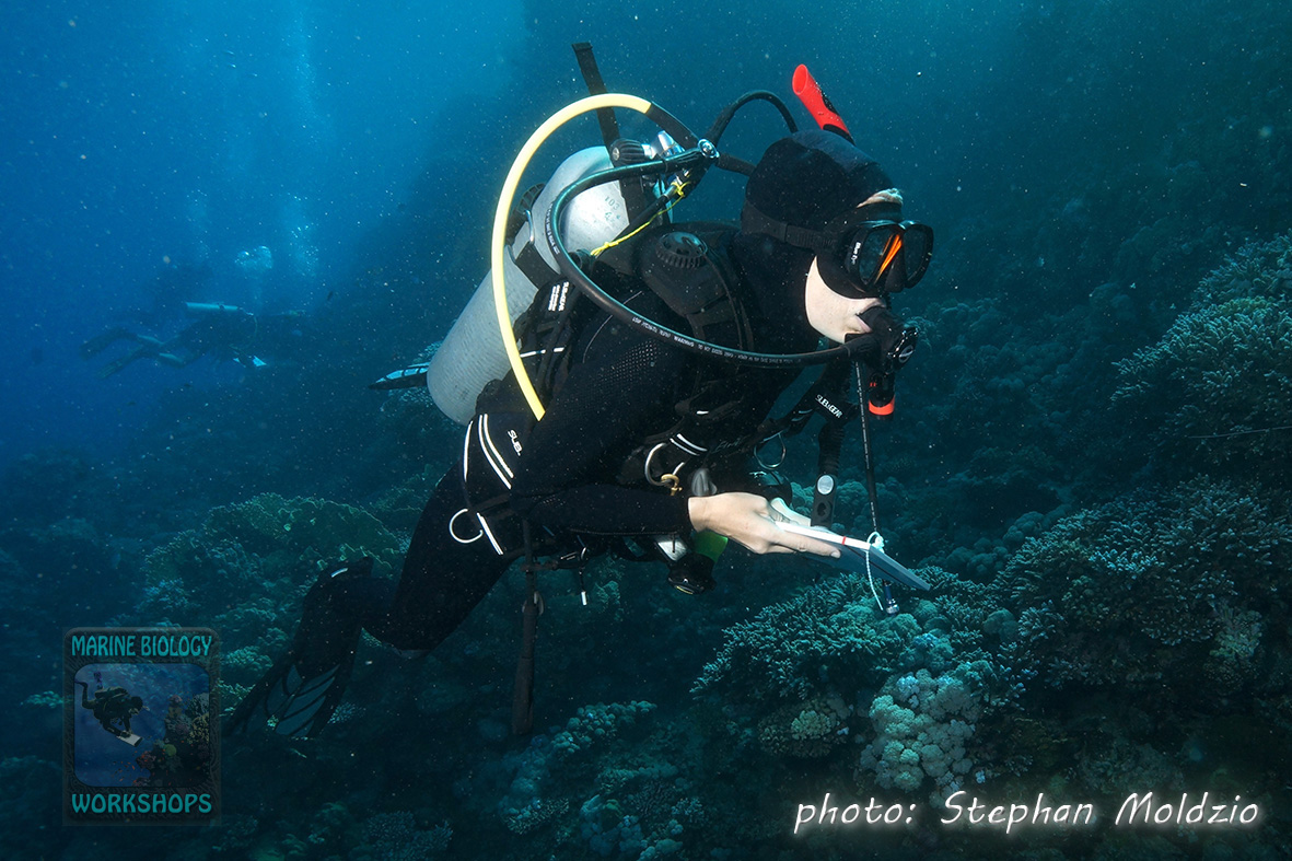 Fish Survey