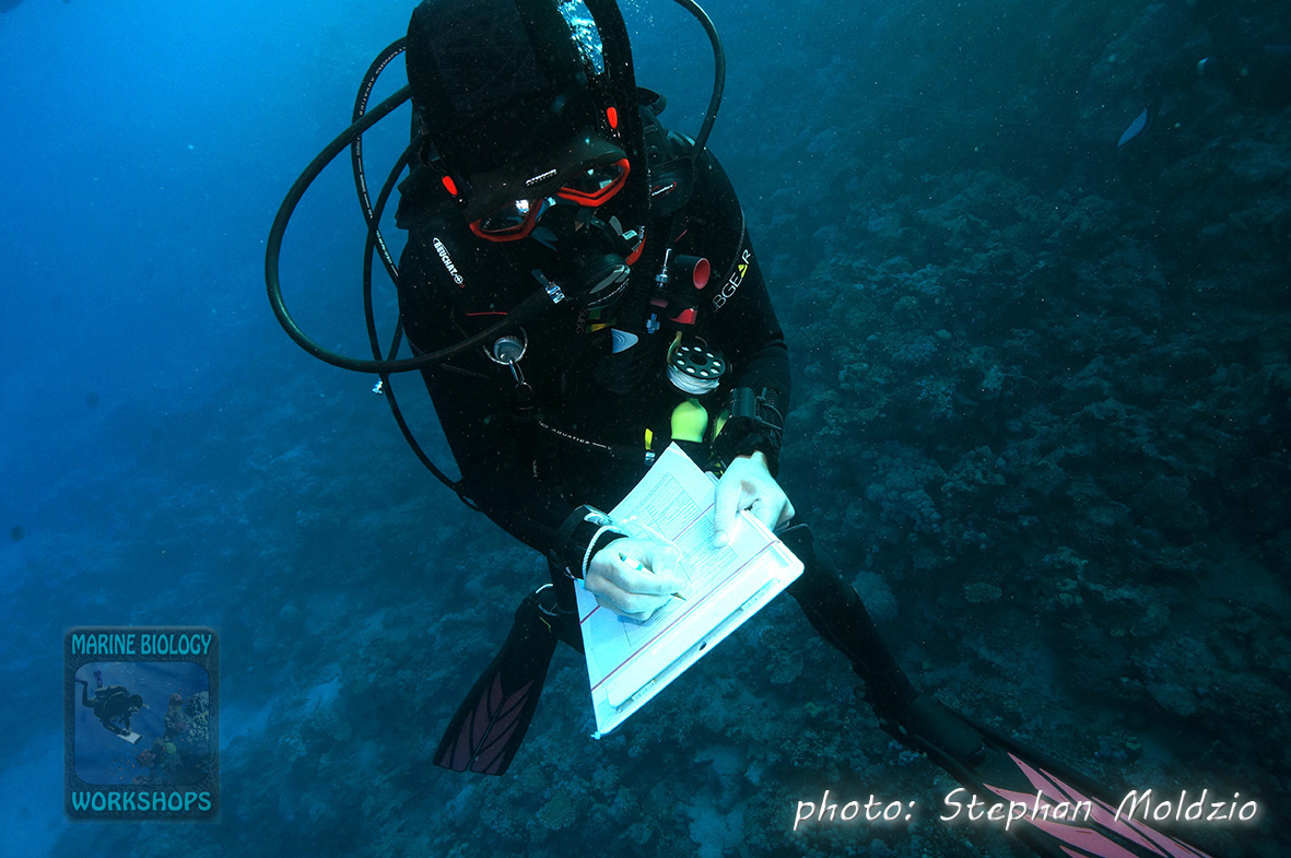 Invertebrate survey