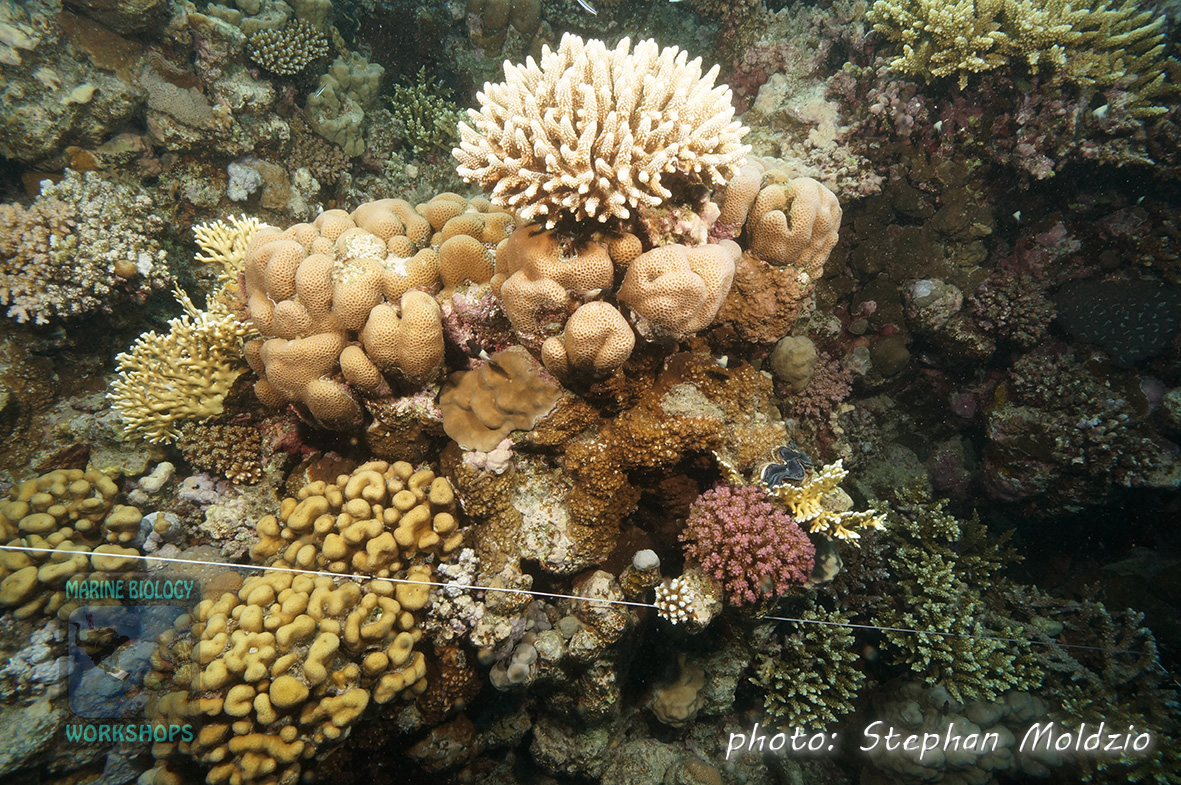 Good Coral growth around Transect Line