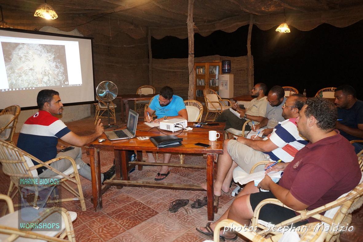 EcoDiver course presentations