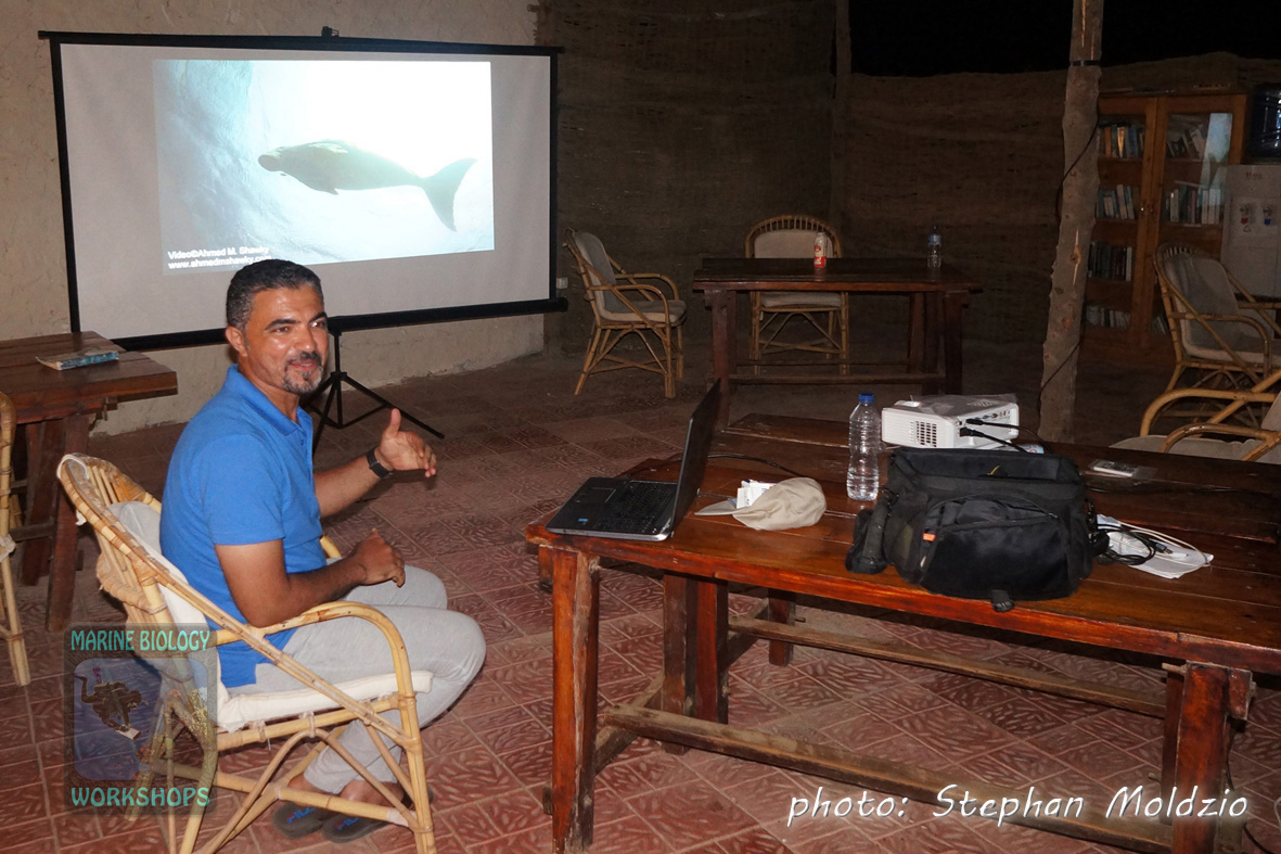 Dugong Presentation by Dr. Ahmed M. Shawky