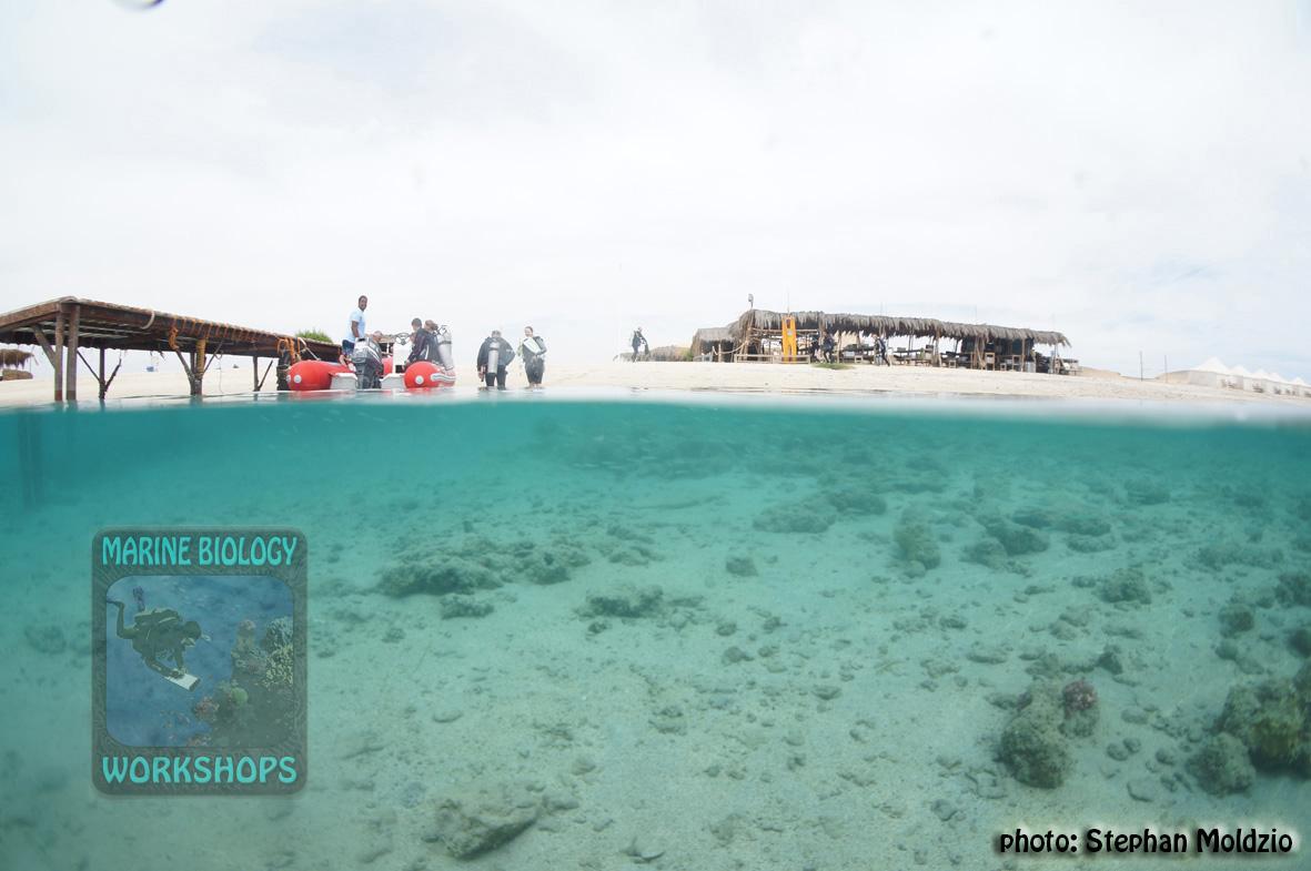 15 Panorama - Half&Half Marsa Nakari DSC00330