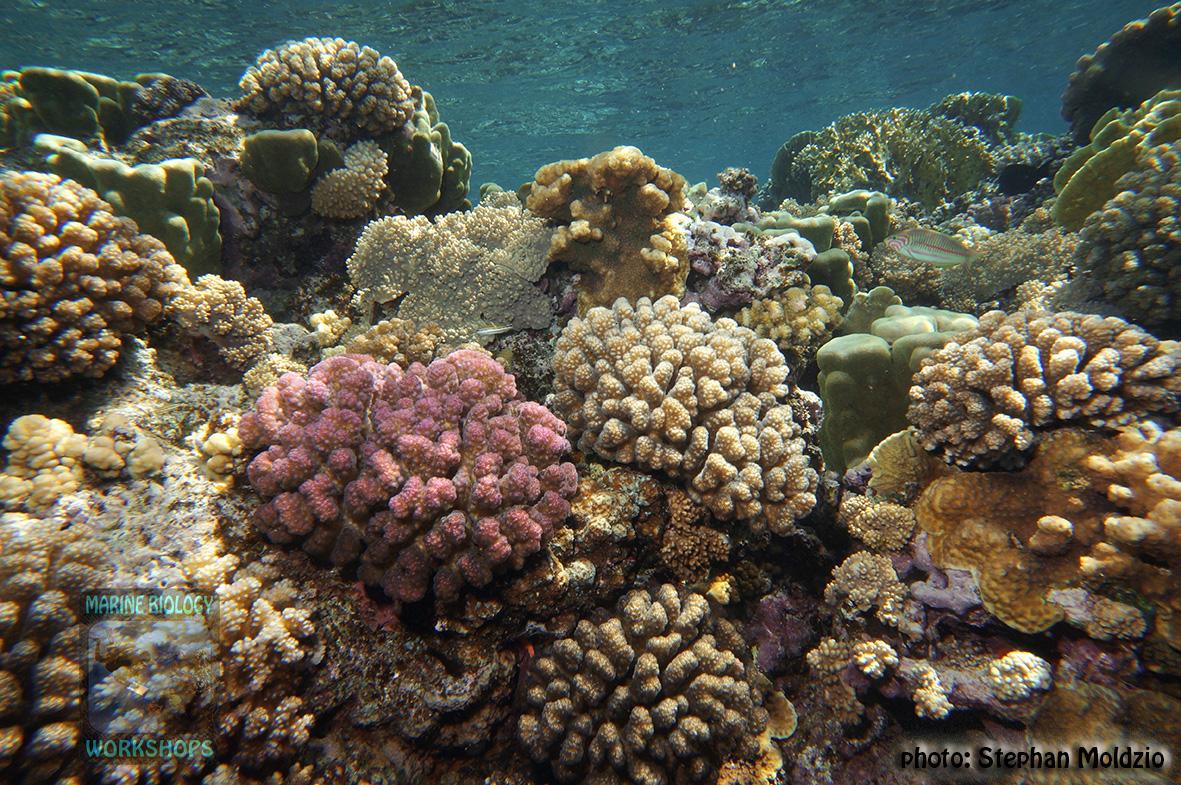 15 Panorama - reef crest Marsa Shagra DSC01649