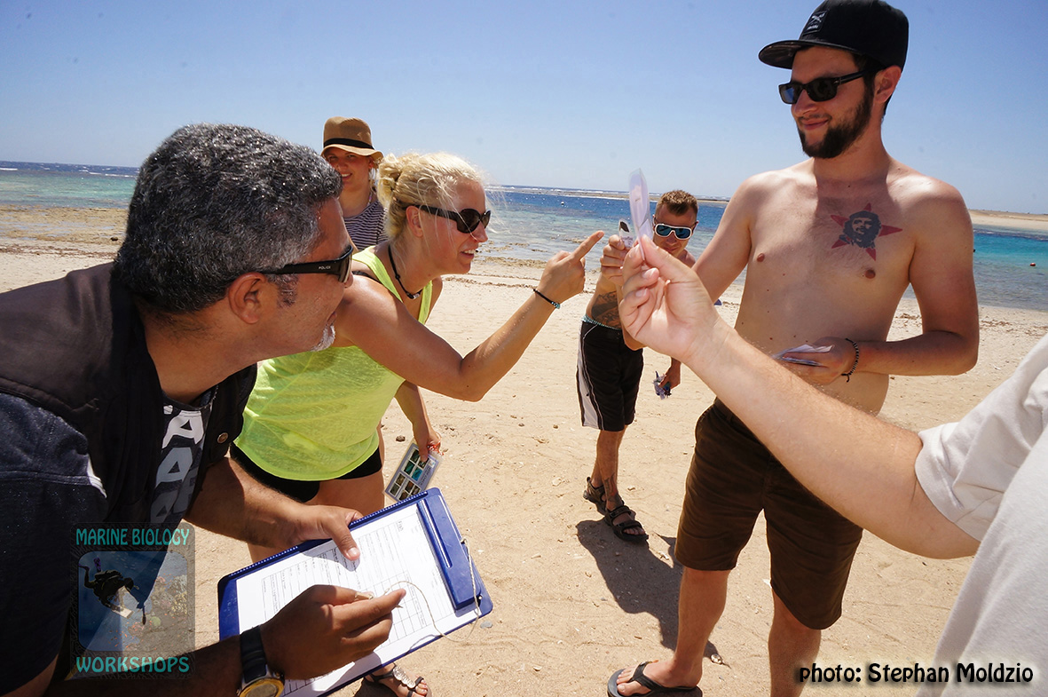 2 RC Eco Diver Course 2015 - Beachexercise DSC09488