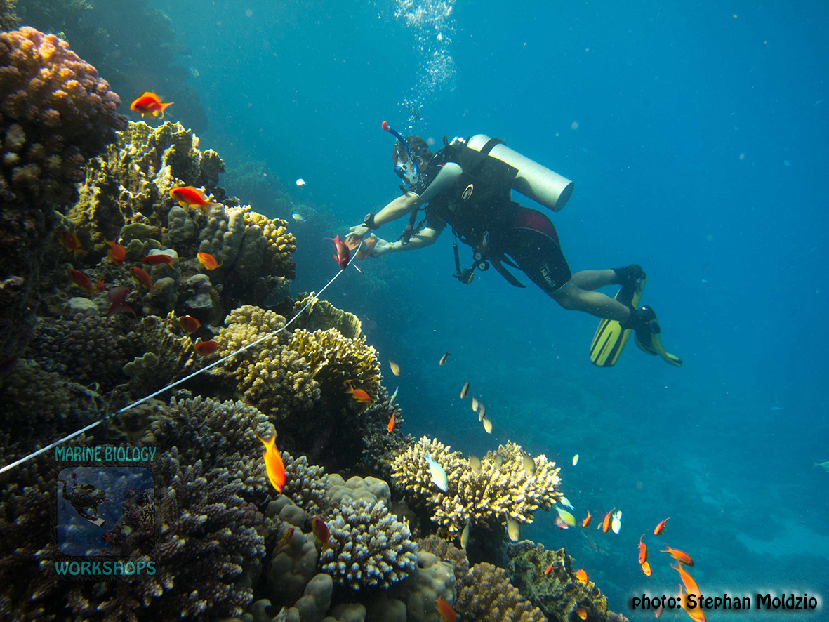 6 Reef Check Survey - Laying out Transect line 9122434639