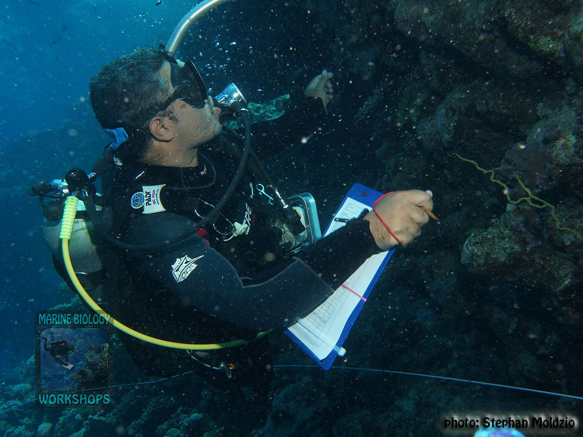 7-DSC03776-Survey-invertebrate-team-Ahmed