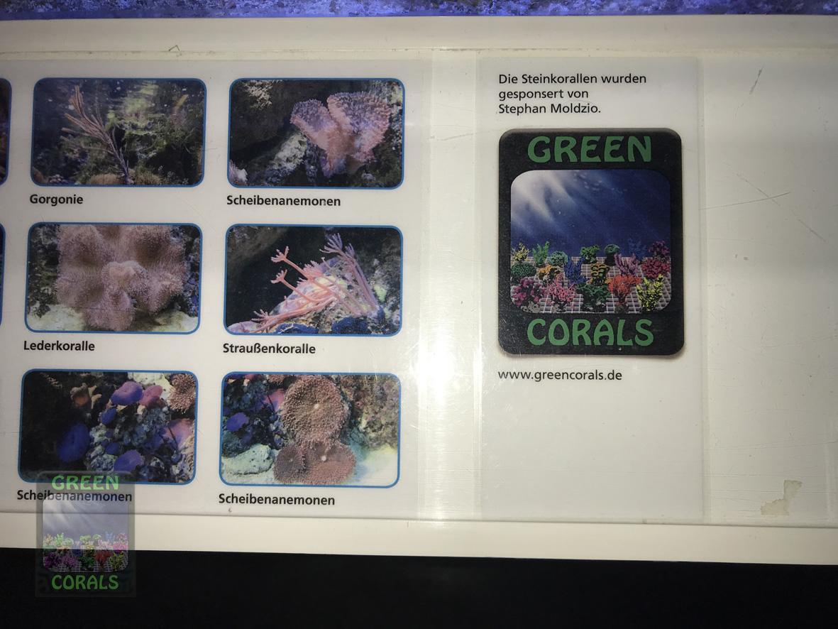 unten im Aquarium wachsen auch einige unserer Korallen
