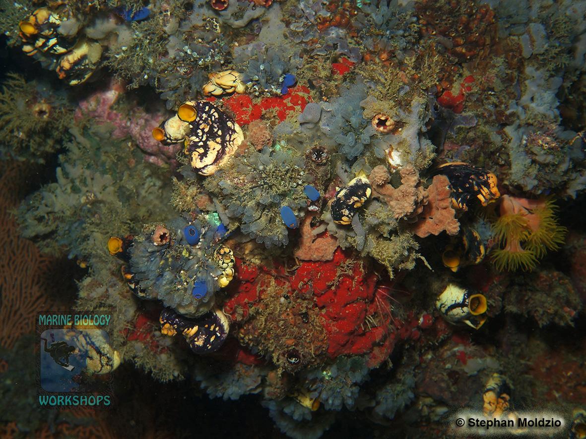 DSC00554 Sponges & Ascidians