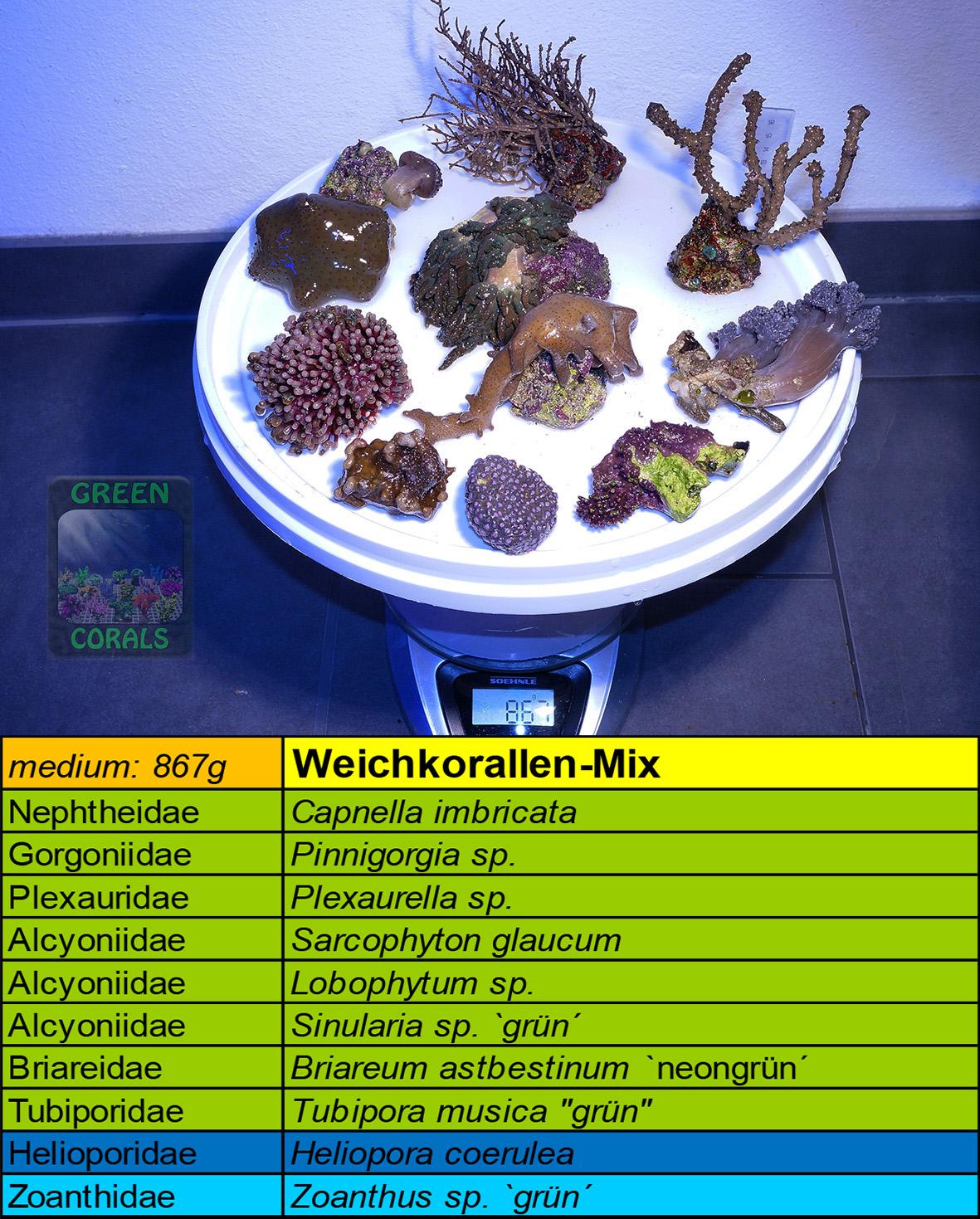 15 Weichkorallen Mix 867g