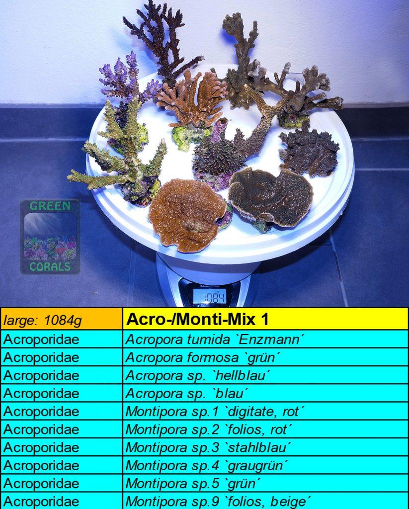 10-acro-monti-mix-l-1084g