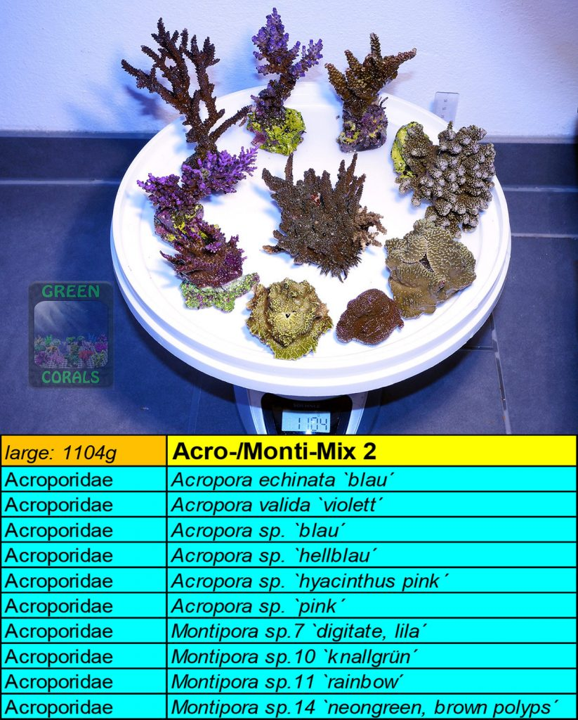12-acro-monti-mix-2-l-1104g
