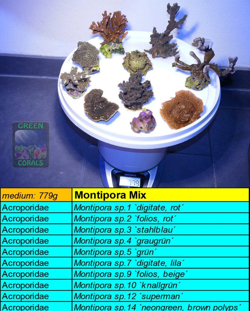6-montipora-spezial-mix-779g