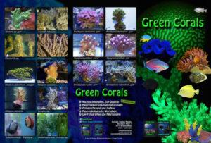 Flyer Korallenableger
