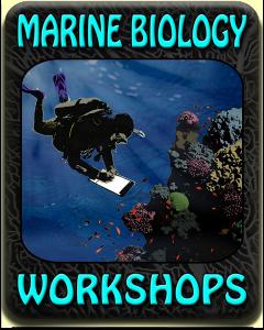 @MarineBiologyWorkshops