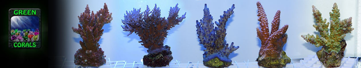 GreenCorals