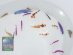 Fische NZ